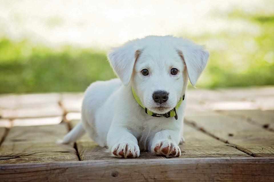 código de colores para perros