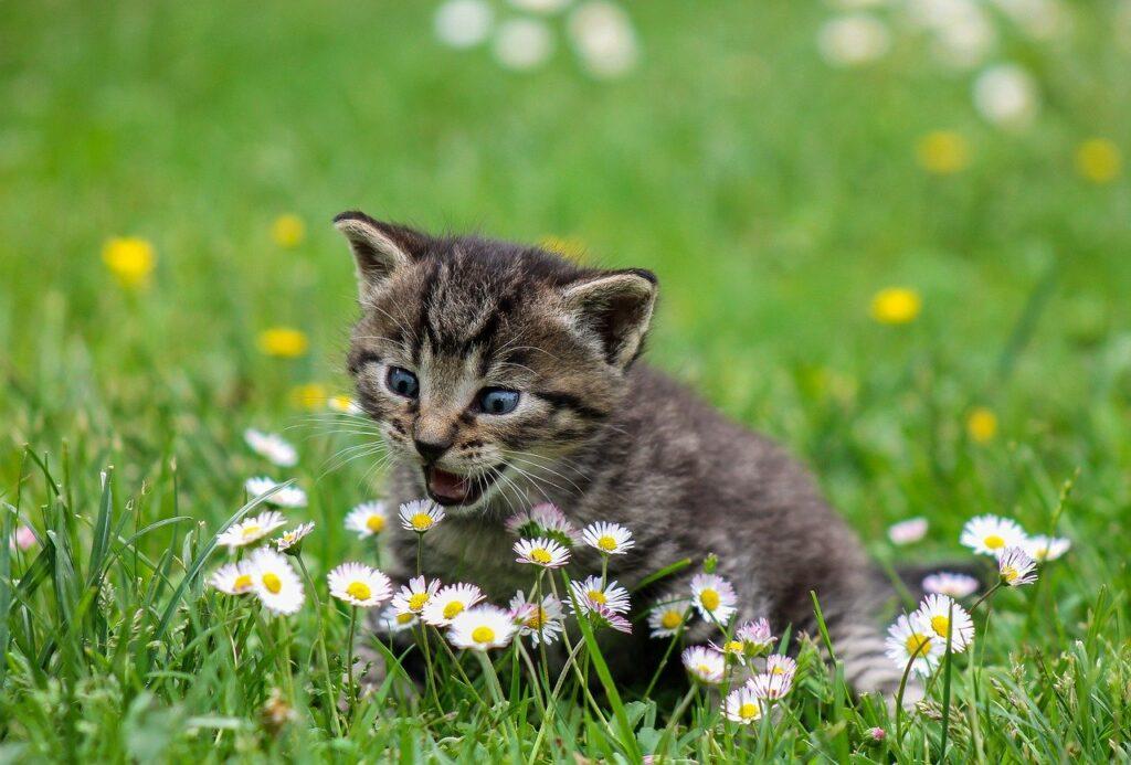 muestras de cariño de los gatos